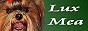 Купить миниатюрного щенка йоркширского терьера питомник СПб Люкс Миа