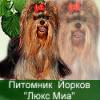 Информация по щенкам на продажу на 27.08.2013 г.