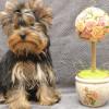 Информация по щенкам на продажу на 14.12.2013 г.