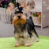 Информация по щенкам на продажу на 04.10.2014