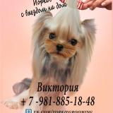 Информация для покупателей щенков йорков